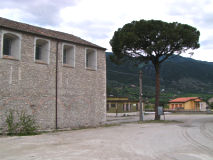 Il pino davanti al Convento